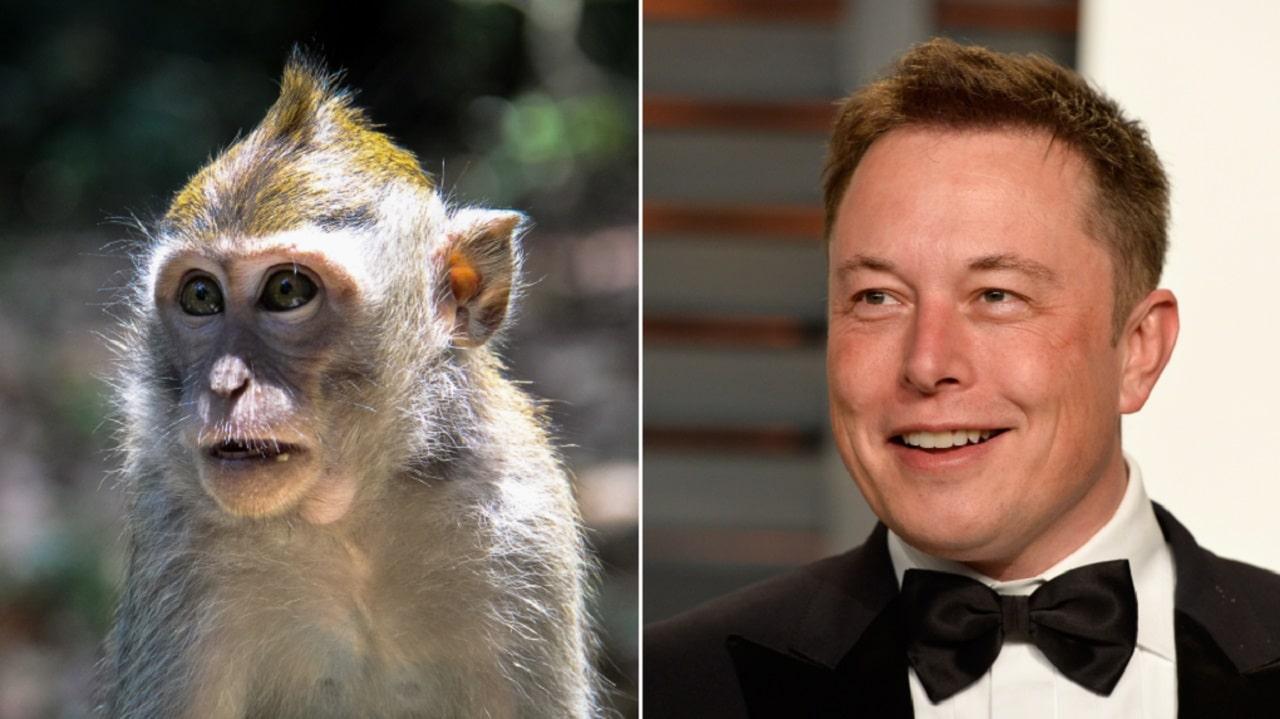Anche una scimmia può giocare ai videogiochi, con la propria mente thumbnail
