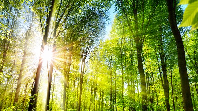 foresta sole e luce