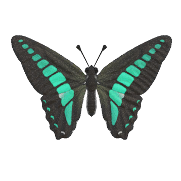 Graphium sarpedon Animal Crossing New Horizons