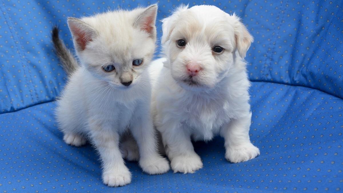 Miglior Amico di Europ Assistance Italia è la polizza per la tutela degli animali domestici thumbnail