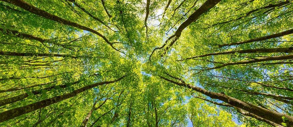 Giornata della Terra verde