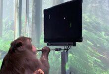 NeuraLink scimmia pong con la mente