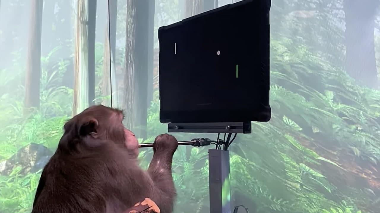Questa scimmia gioca a Pong con la mente, grazie a Neuralink thumbnail