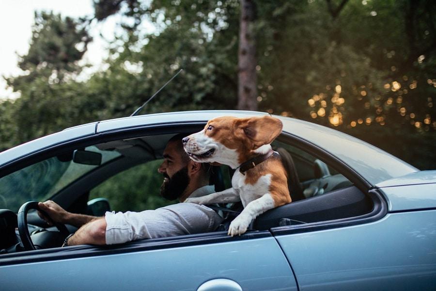 consigli green auto finestrino abbassato