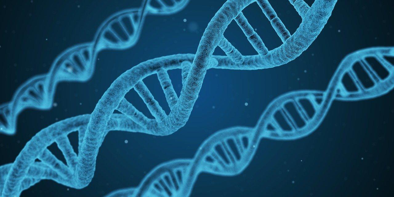 DNA, pronti i nanomateriali 3D super resistenti thumbnail