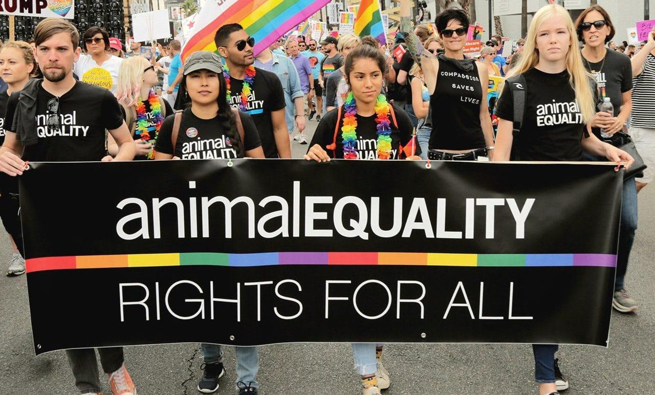 Sabrina Salerno supporta l'asta benefica di Animal Equality thumbnail
