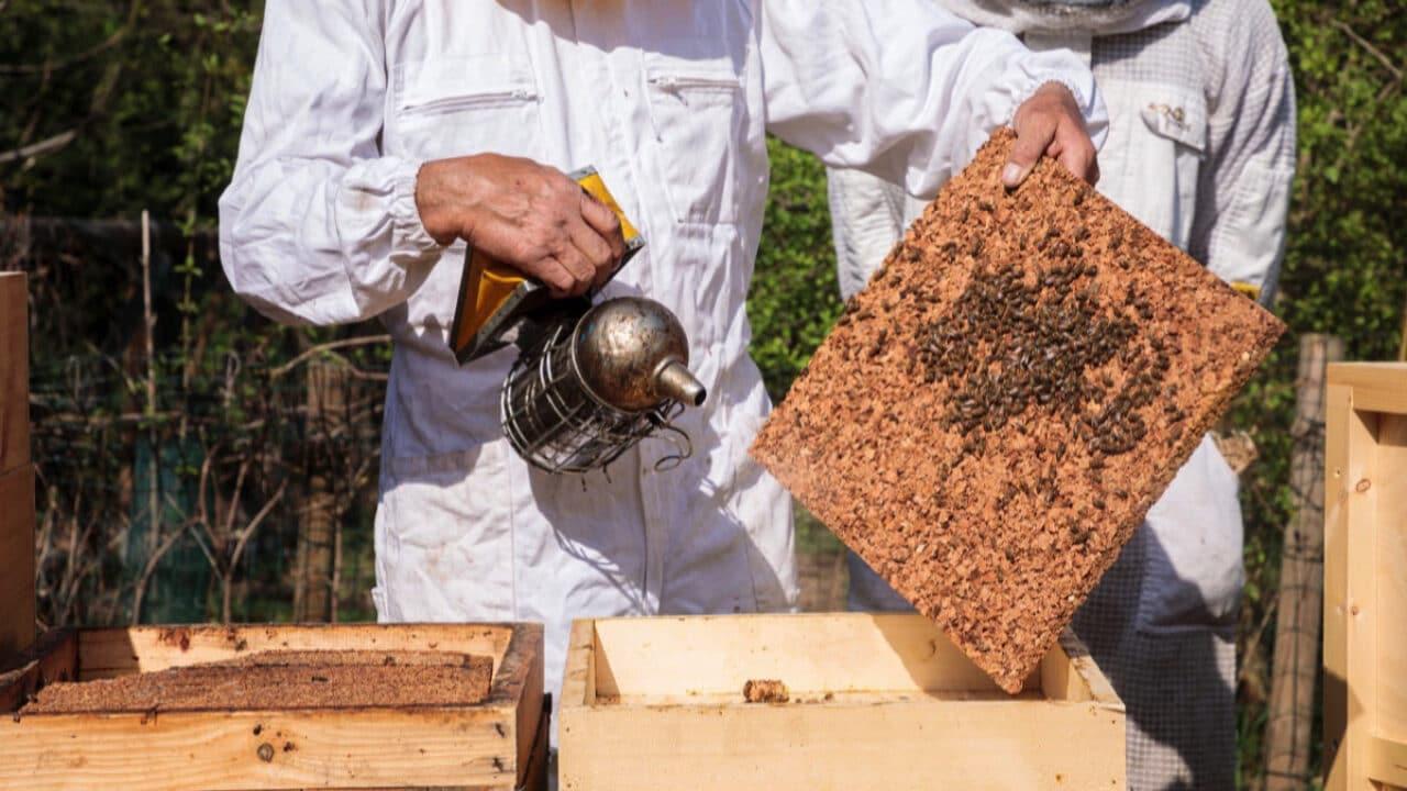 Giornata Mondiale delle Api: Dyson porta 200 mila api nel cuore di Milano thumbnail