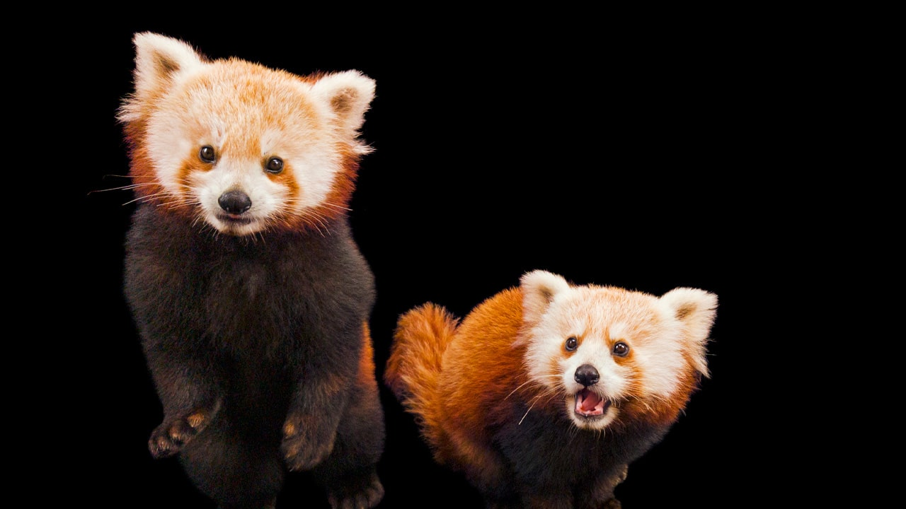 Endangered Colour: OPPO e National Geographic per la salvaguardia delle specie animali in via di estinzione thumbnail