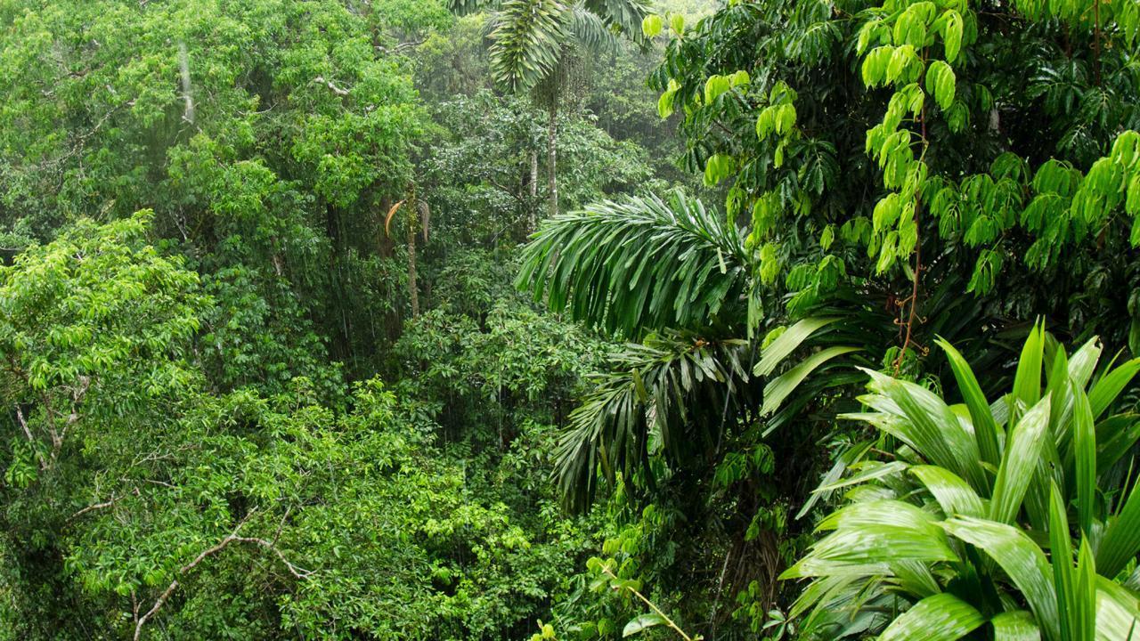 Oggi è la giornata mondiale della foresta pluviale thumbnail