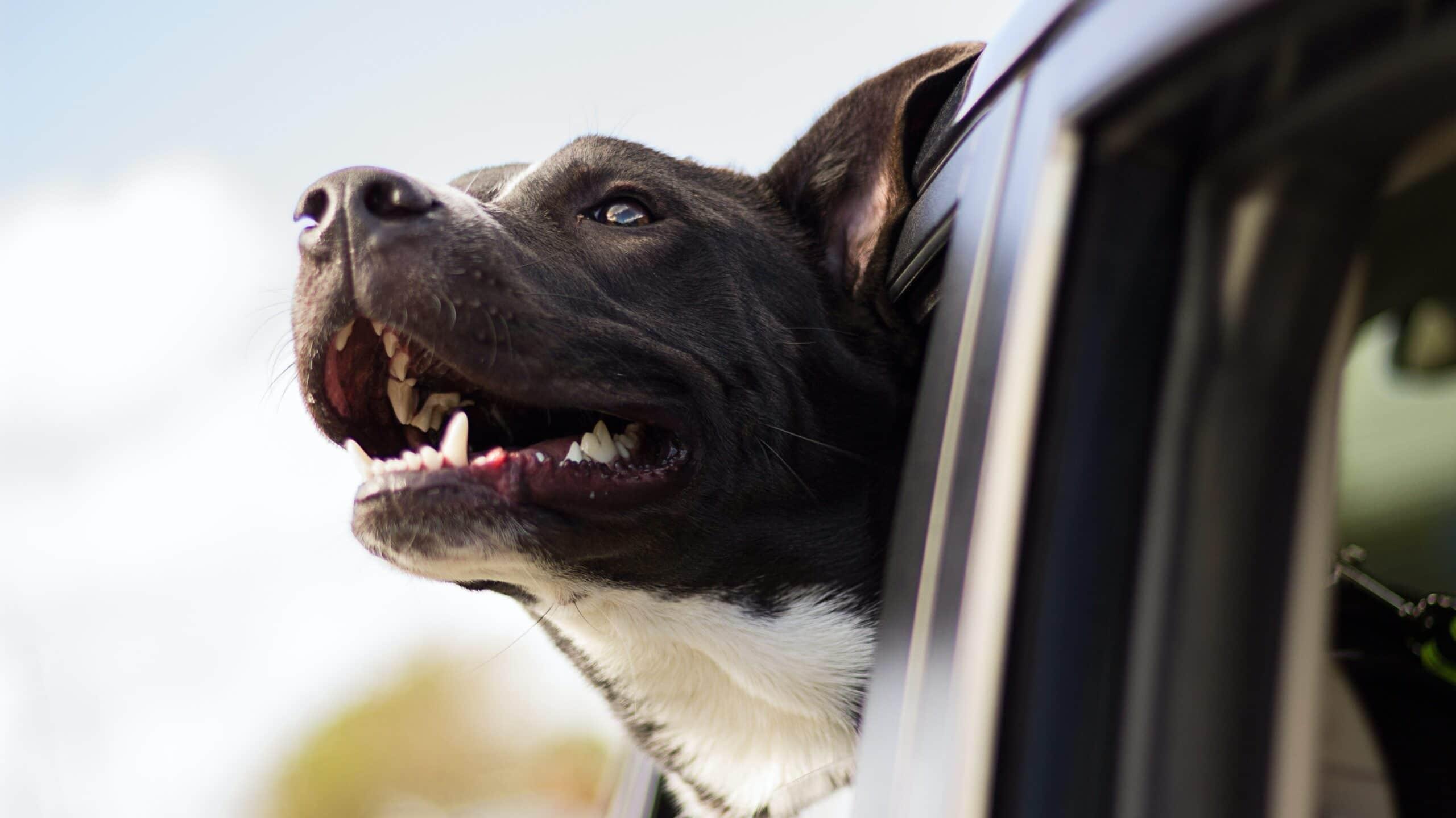 accessori per cani