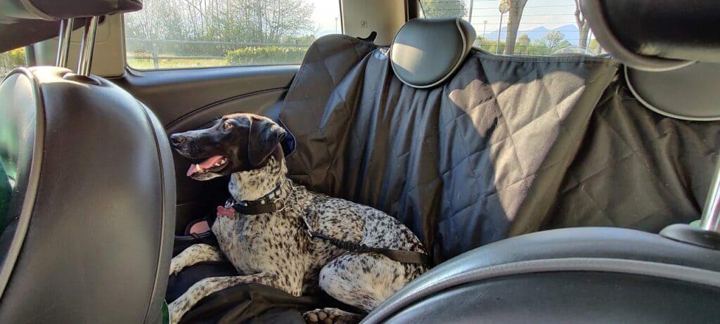 cani in auto cintura