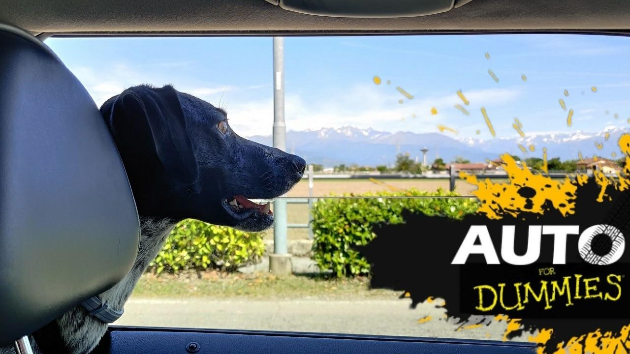 7 consigli per viaggiare con il proprio cane | Auto for Dummies thumbnail