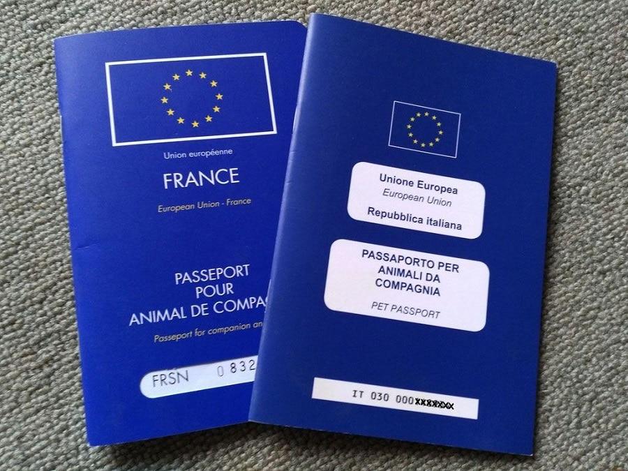 cani in auto passaporto
