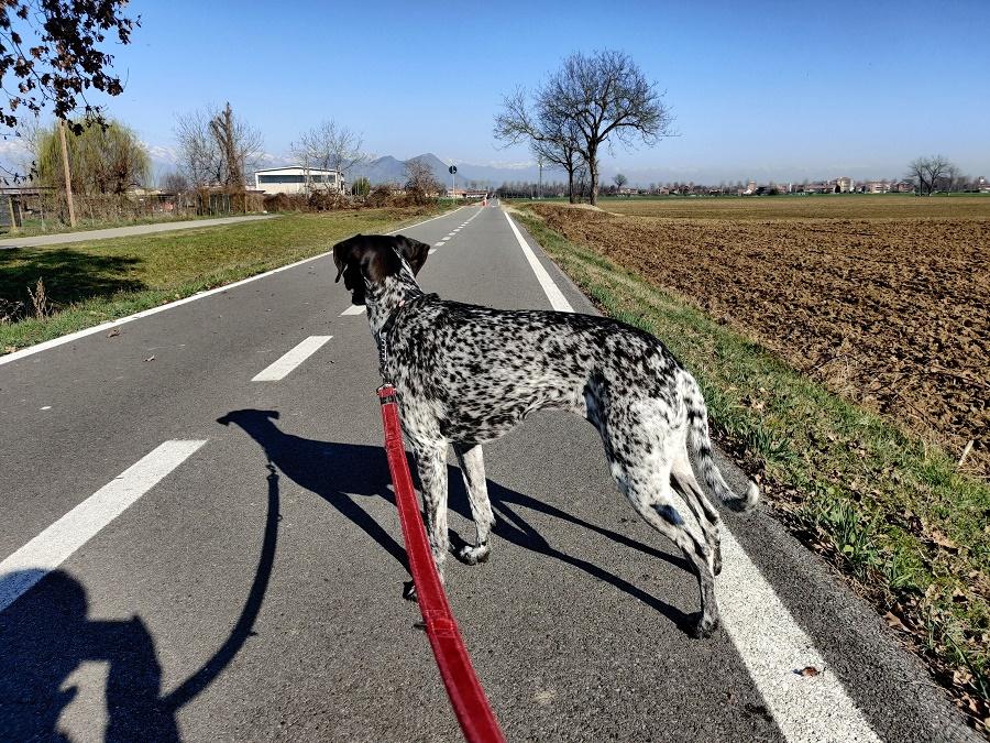 cani in auto passeggiata a metà viaggio