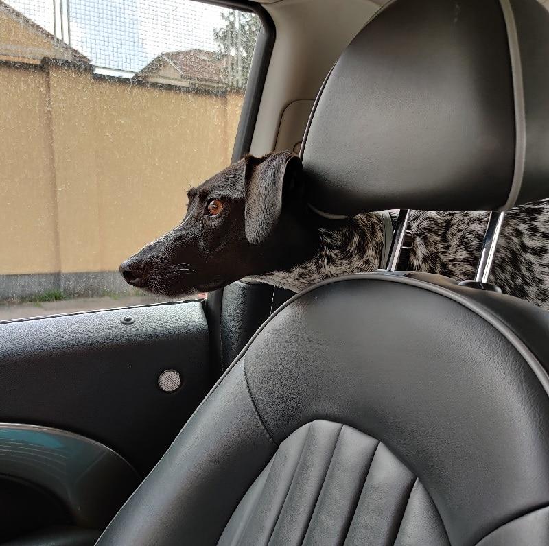 cani in auto prima