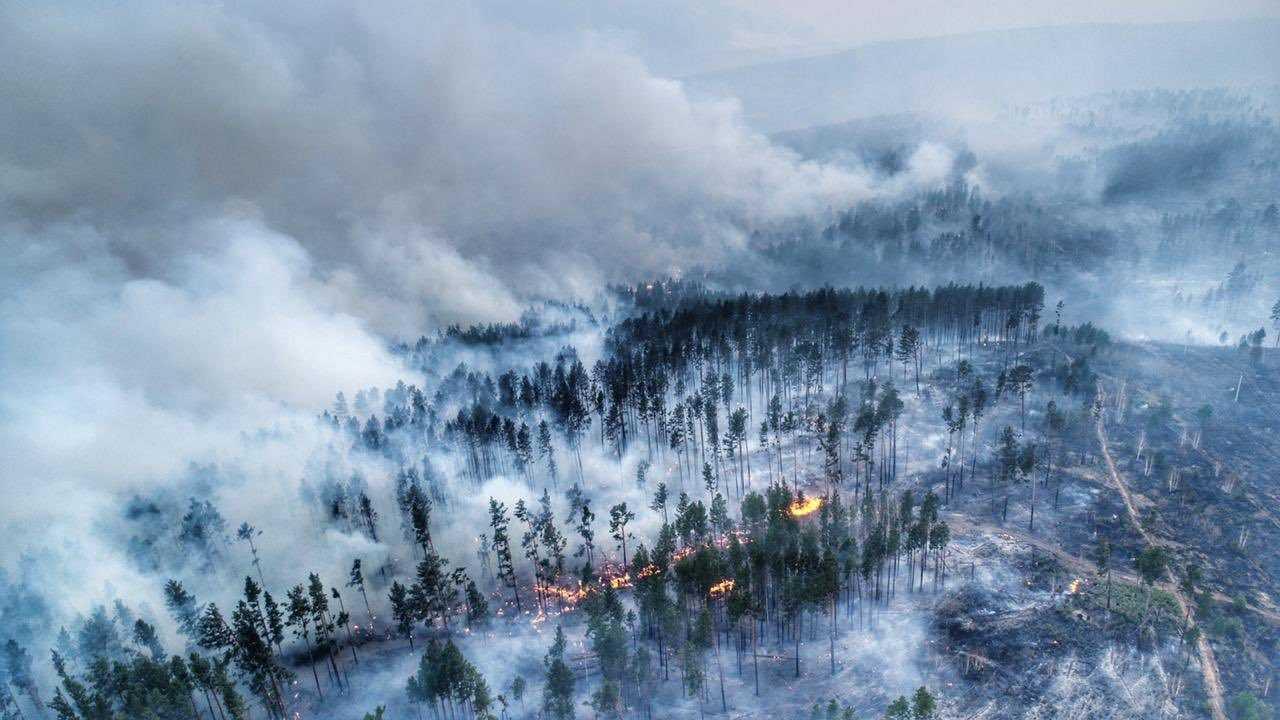 Gli incendi in Russia continuano a bruciare: i dati di Greenpeace thumbnail