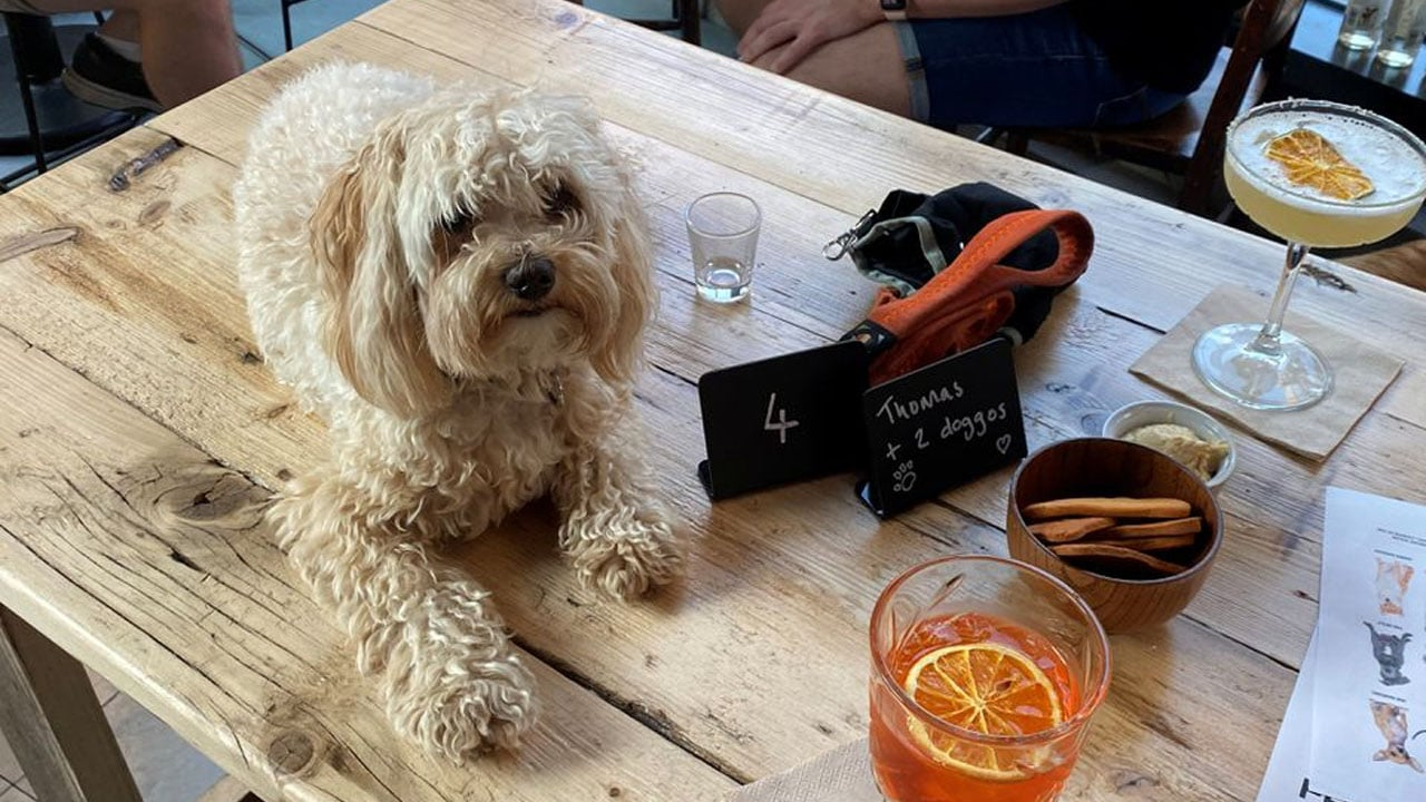 After Bark, il bar che serve i cocktail ai cani e ai loro padroni thumbnail