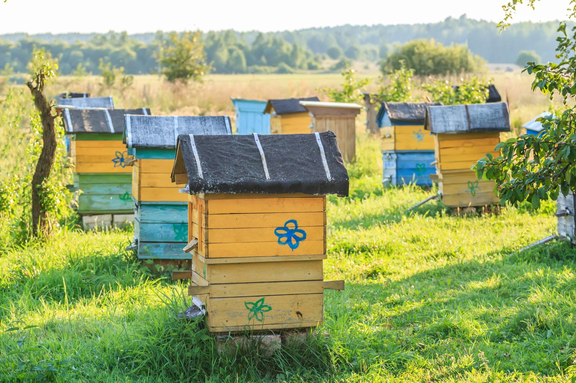 Due famiglie di api protagoniste di un progetto di bio-monitoraggio a Milano thumbnail
