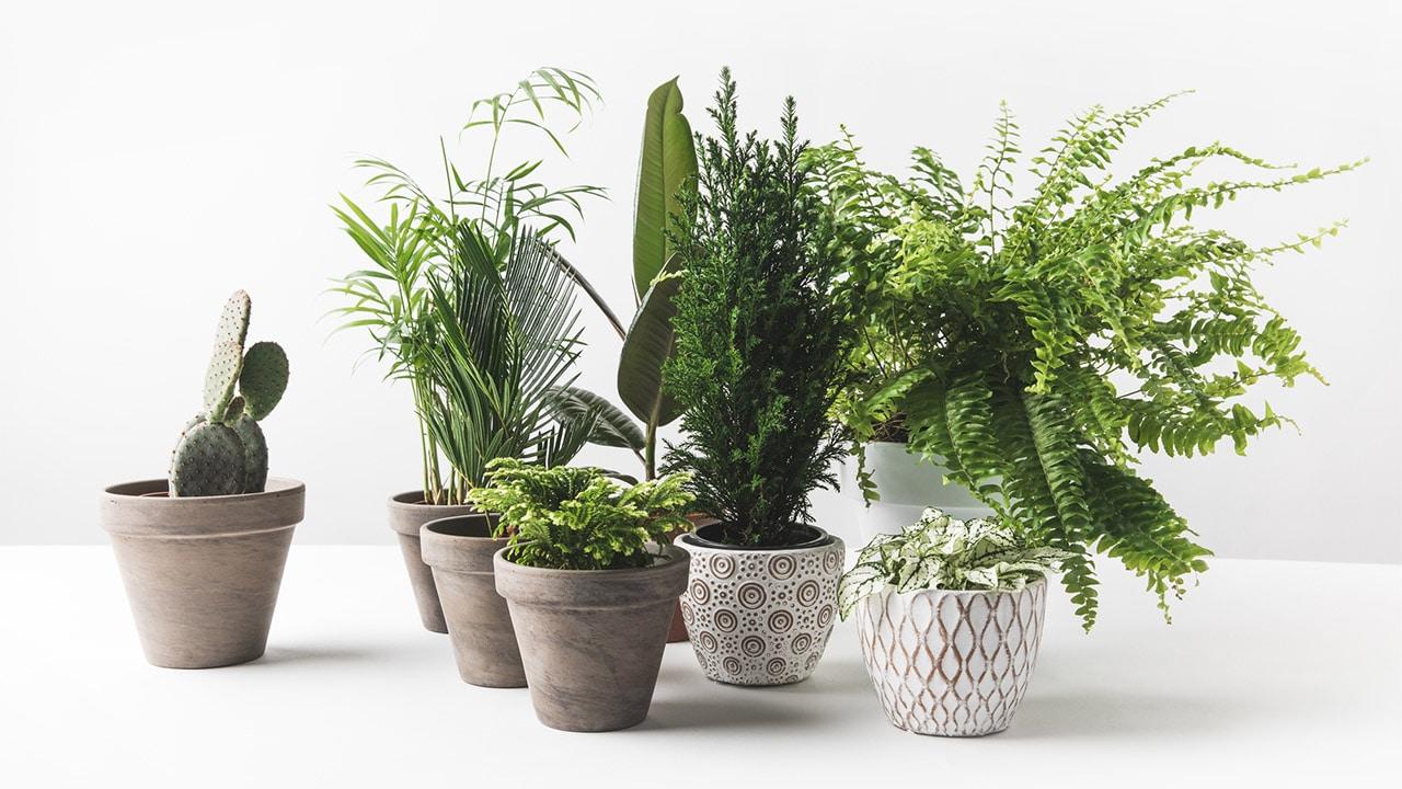 Le migliori app per prendersi cura delle proprie piante thumbnail