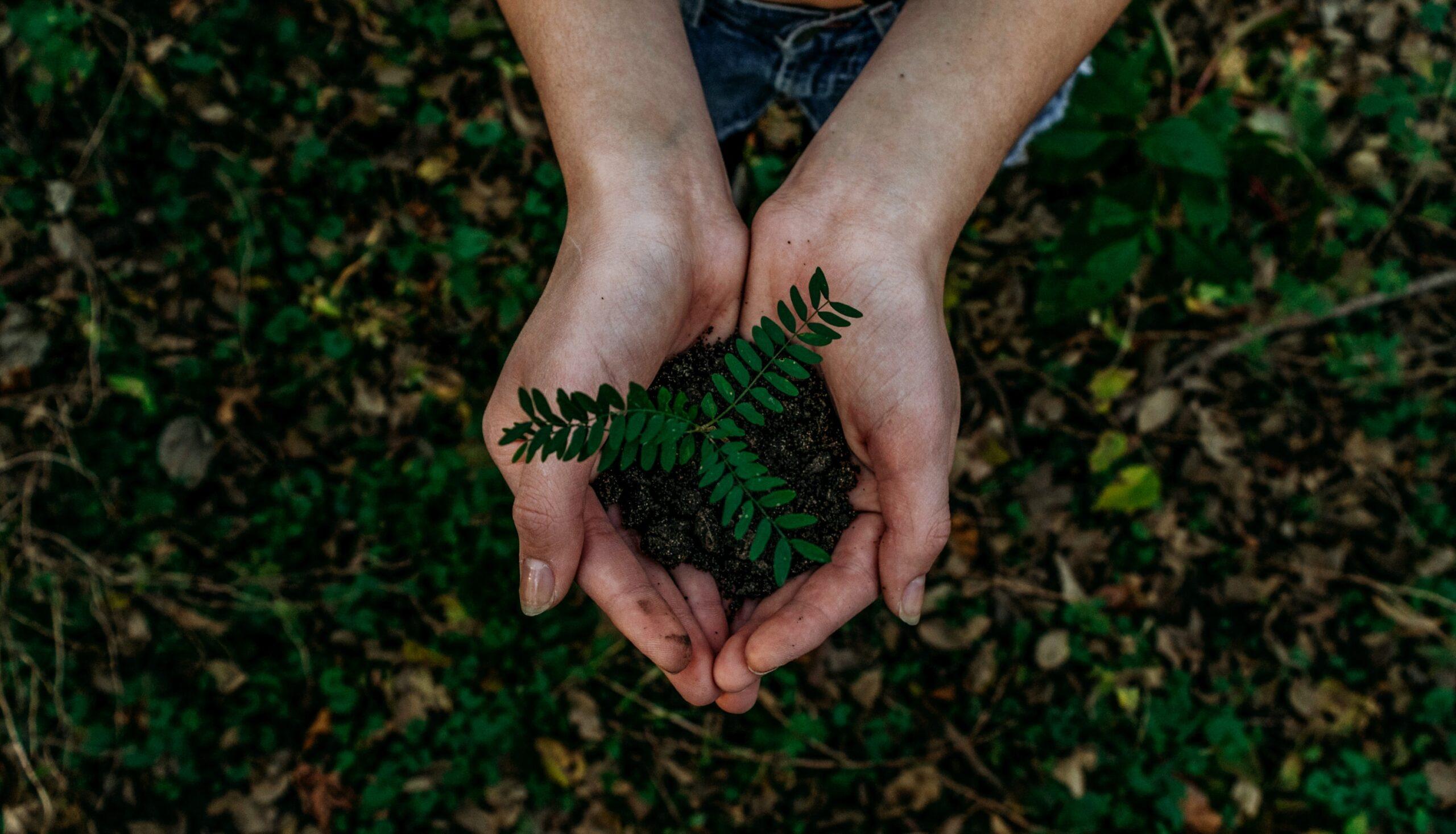 Un anno di Climate Pledge Friendly, il programma di sostenibilità ambientale di Amazon thumbnail